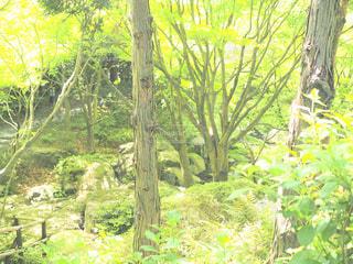 フォレスト内のツリーの写真・画像素材[1155428]