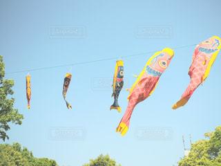 空気は、凧の束の写真・画像素材[1155434]