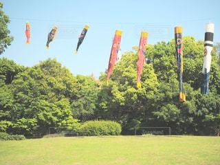 フィールドに凧の飛行の人々 のグループの写真・画像素材[1155436]