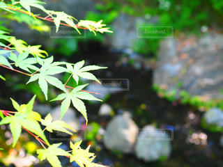 近くの植物のアップの写真・画像素材[1155543]