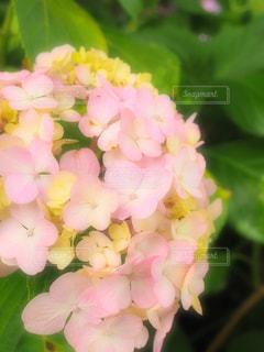 近くの花のアップの写真・画像素材[1253016]