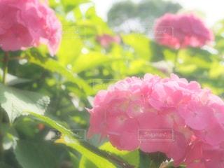 近くの花のアップの写真・画像素材[1253017]