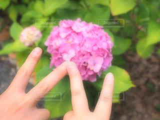 花を持っている手の写真・画像素材[1253021]