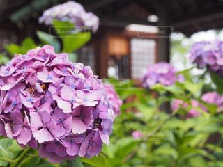 近くに紫の花のアップの写真・画像素材[1253024]