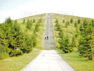 道の端に木のパスの写真・画像素材[1380866]