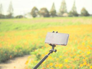 近くにいくつかの草のアップの写真・画像素材[1468244]