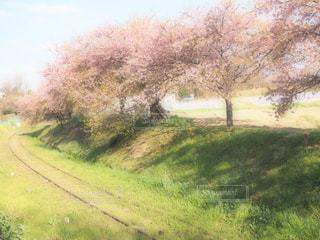 緑豊かな緑のフィールドで列車の写真・画像素材[1865961]