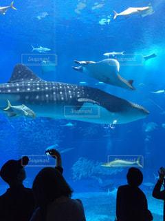 水面下を泳ぐ魚たちの写真・画像素材[708403]