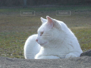 白い面の上に座って猫 - No.708587