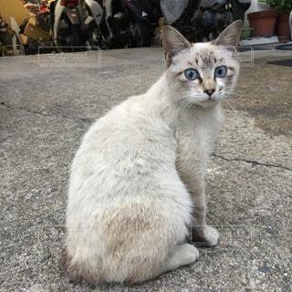 猫三昧の写真・画像素材[11585]