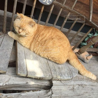 猫の写真・画像素材[39000]