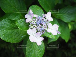 近くの花のアップの写真・画像素材[720403]