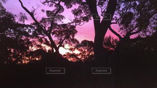 日没の前にツリー - No.709004