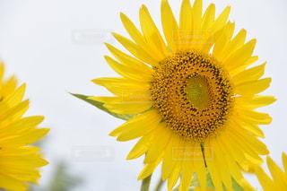 近くの花のアップの写真・画像素材[709859]