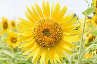近くの花のアップの写真・画像素材[709860]