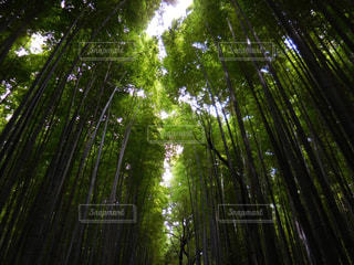 竹林の写真・画像素材[710014]