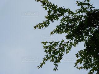 木の上を飛ぶ鳥の群れの写真・画像素材[710067]
