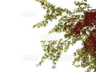 近くの木のアップの写真・画像素材[710953]