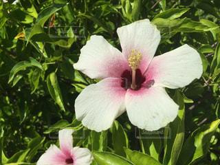 植物にピンクの花の写真・画像素材[712032]