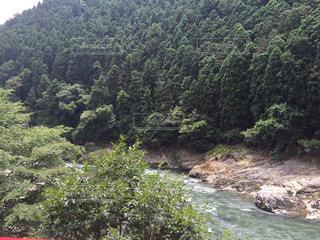 森を流れる川の写真・画像素材[764121]