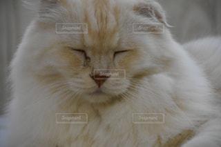 近くに猫のアップの写真・画像素材[781695]
