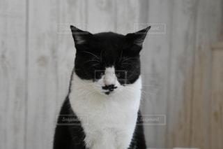 白い面の上に座って黒い猫の写真・画像素材[781697]