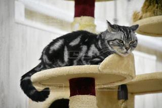 テーブルの上に座って猫の写真・画像素材[781702]