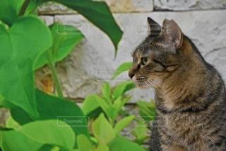 庭に座っている猫の写真・画像素材[781713]