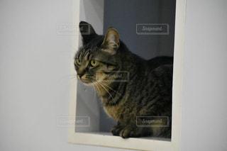 カメラにポーズを鏡の前で座っている猫の写真・画像素材[781716]
