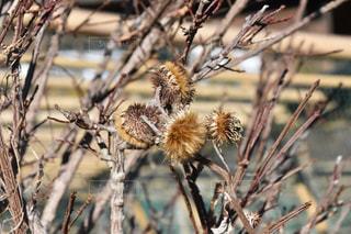 木の枝にとまった鳥の写真・画像素材[964584]