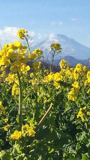 黄色い花の上に座っての花で一杯の花瓶の写真・画像素材[964589]