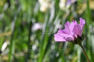 近くの花のアップの写真・画像素材[964590]