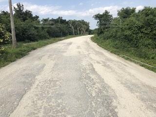 道の端に木のパスの写真・画像素材[1016821]