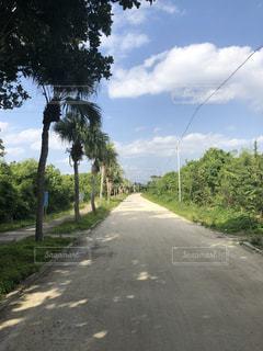 道の端に木のパスの写真・画像素材[1016825]