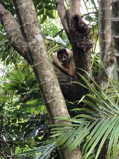 木の枝に座っている猿の写真・画像素材[1016849]