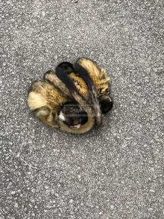 地面に横になっている猫の写真・画像素材[1016851]