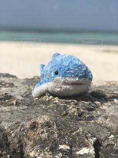 近くのビーチでカメをの写真・画像素材[1016857]