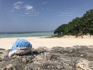 水の体の横にある砂浜のビーチの写真・画像素材[1016858]