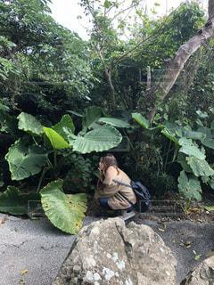 ツリーの横にある岩の上に座っている人の写真・画像素材[1016861]
