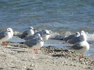 砂浜に立っているカモメの群れの写真・画像素材[963353]