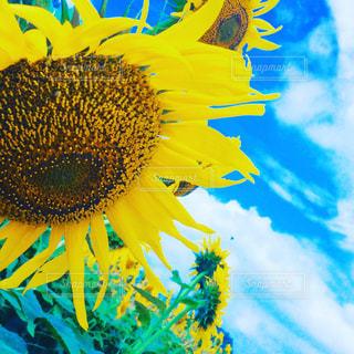 近くの花のアップの写真・画像素材[711209]