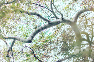 木の枝にとまった鳥の写真・画像素材[730267]