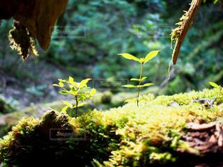 近くの木のアップの写真・画像素材[710671]