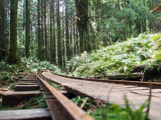緑豊かな緑の森の上に座っている木製のベンチ - No.710675