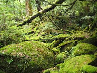 森の中の緑の植物 - No.710676
