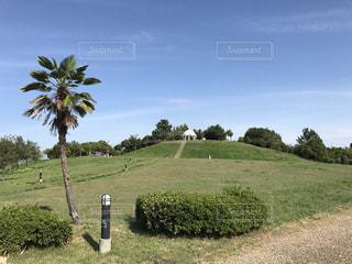 背景の木と大規模なグリーン フィールドの写真・画像素材[710361]