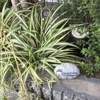 庭の植物の写真・画像素材[728210]