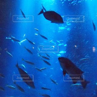 水面下を泳ぐ魚たちの写真・画像素材[748396]