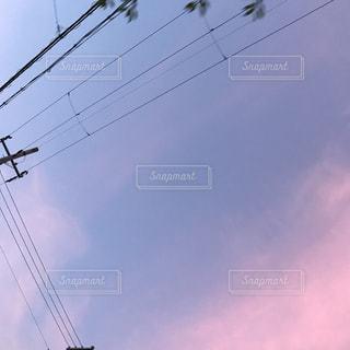 空を飛んでいる鳥の写真・画像素材[1377369]