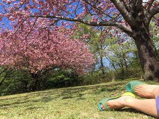 公園で座っている女性 - No.710587